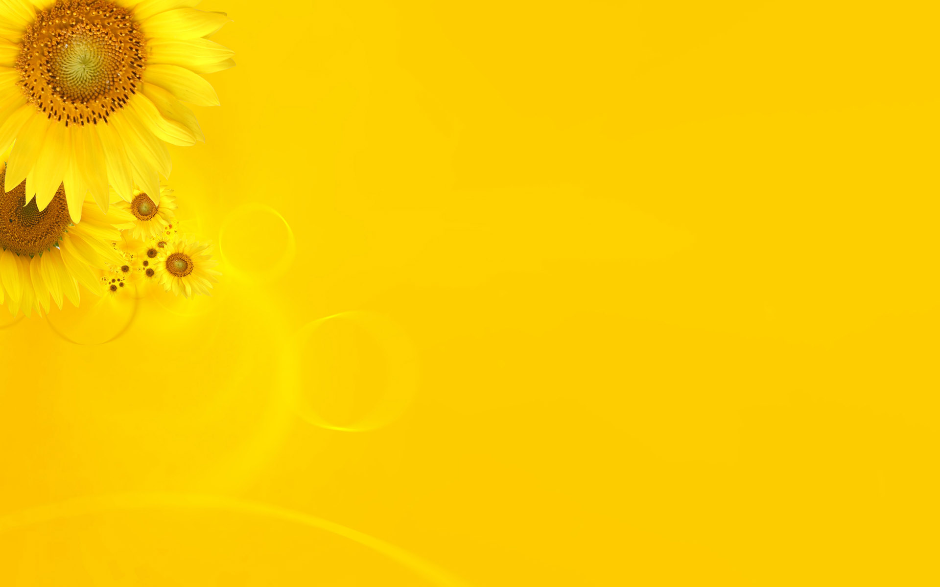 Yellow Wallpapers_peach